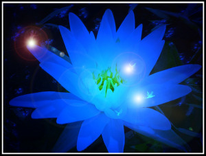 16 - 101412 - lilly at night -