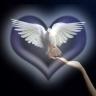12 - 102071 - Dove Hand Heart -