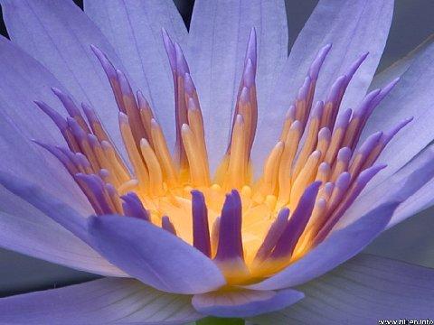 17 - 101619 - light in lotus -