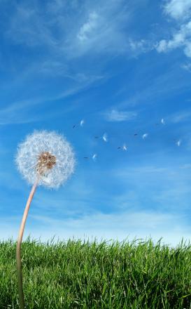 1 - 101847 - Make a Wish -